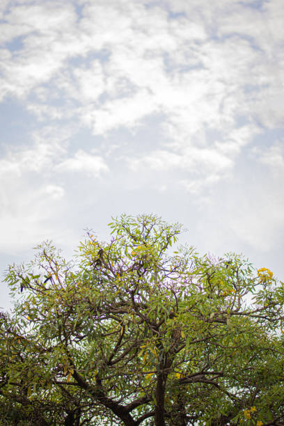 The top of the tree is held in the air with clouds and the sky as the background stock photo