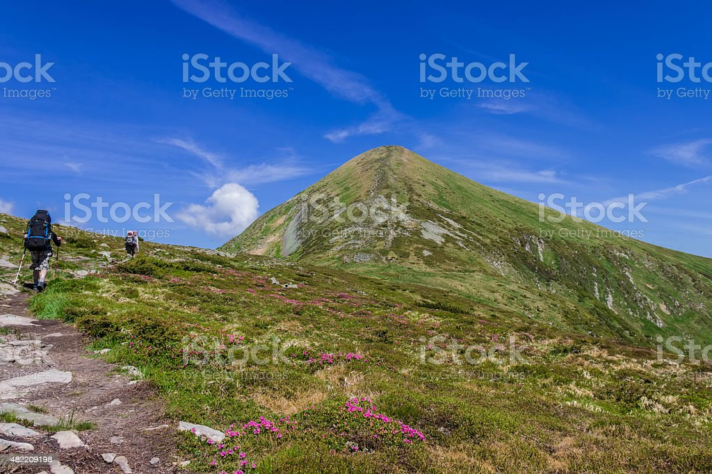 The trail to mount Goverla among rhododendrons stock photo