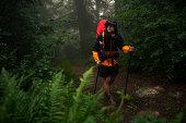 The traveler walks through the forest