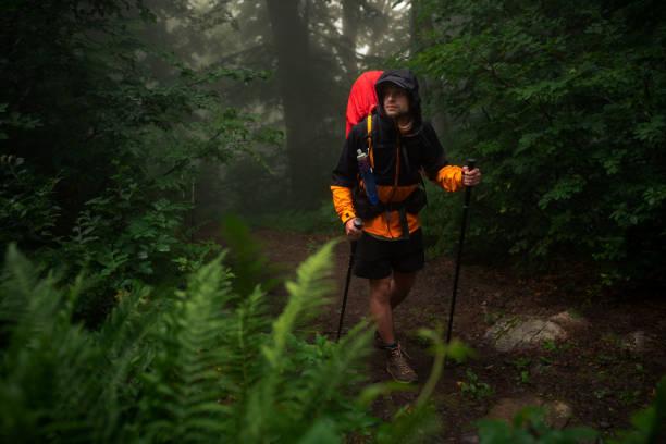 el viajero camina por el bosque - all vocabulary fotografías e imágenes de stock
