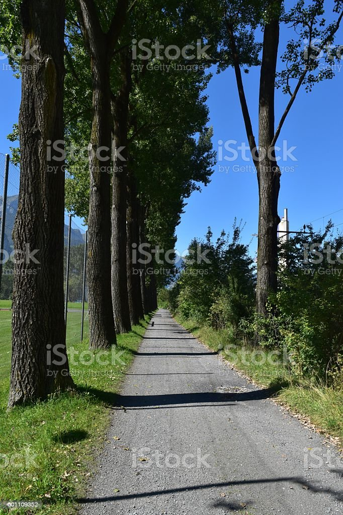 The Tree Alley stock photo