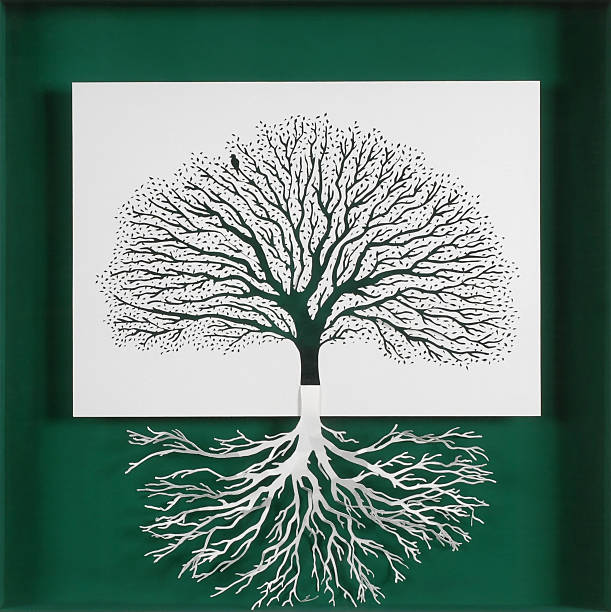 The tree and its roots. stock photo