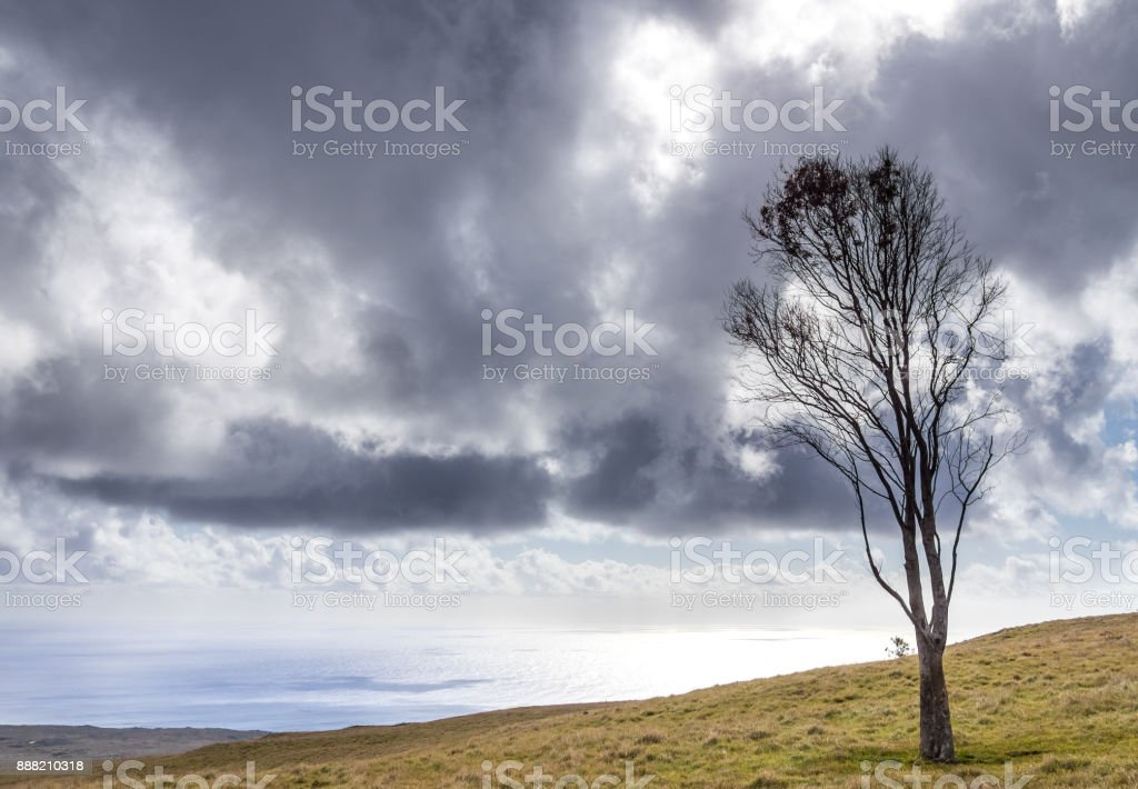 The Tree and the Storm stock photo