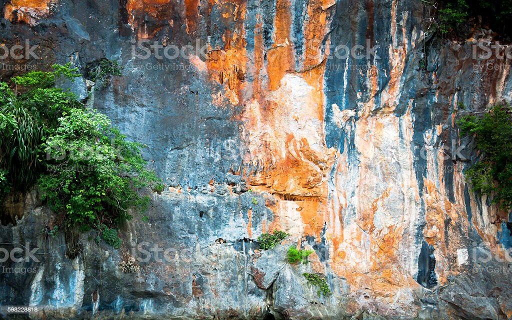 the tree are grow on cliff or rock wall foto royalty-free