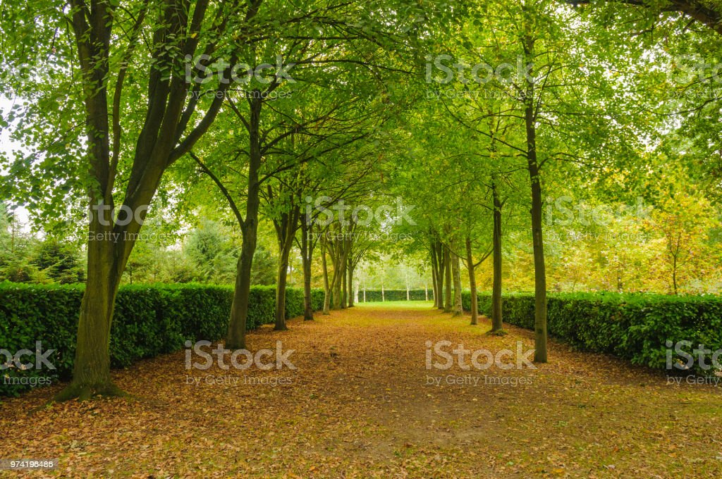The Tree Cathedral, Whipsnade stock photo