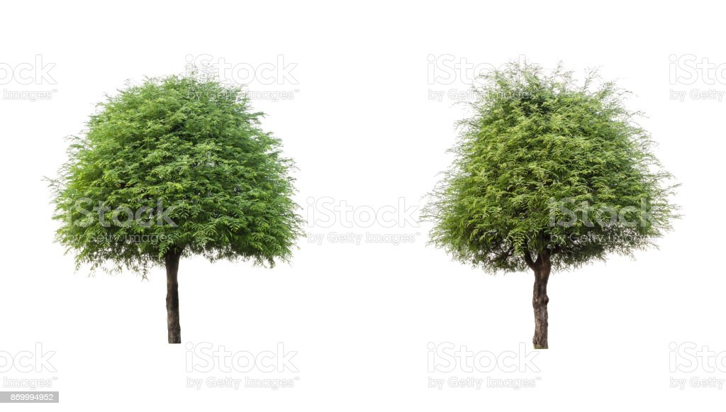 The tree collection,tree isolated against a white background stock photo