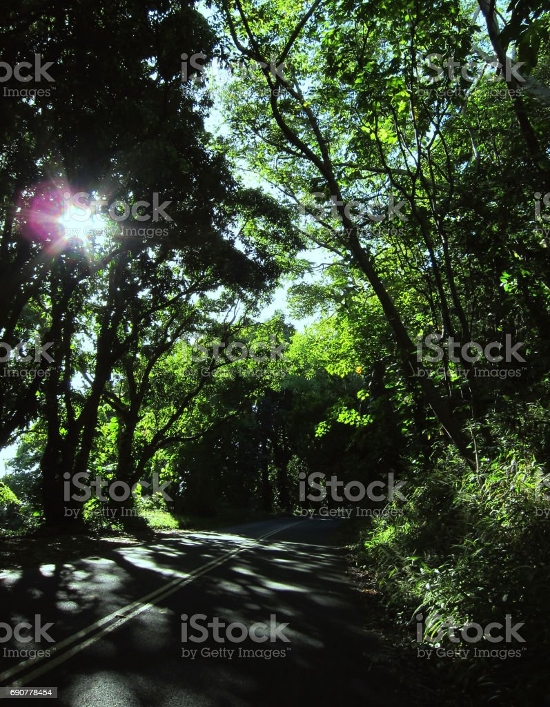 The tree covered drive up the mountain to Tantalus in Honolulu, Hawaii. stock photo