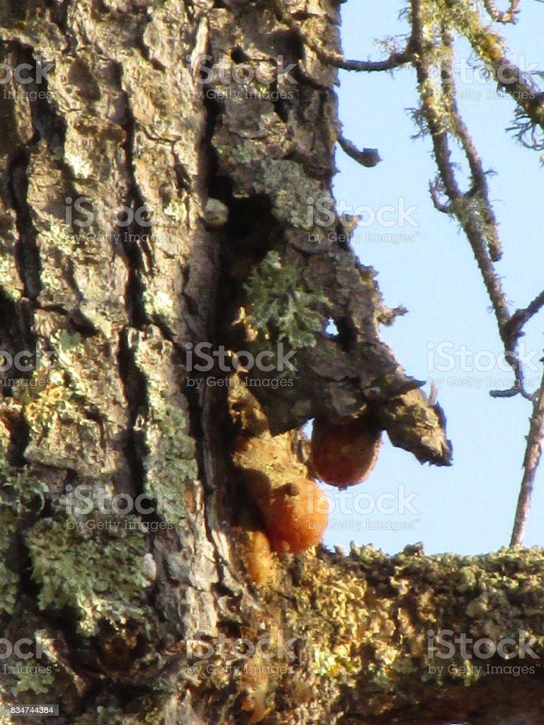 The tree devil stock photo