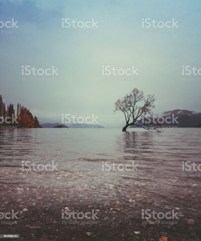 The Tree in Lake Wanaka, south Island, New Zealand landscape royalty-free stock photo