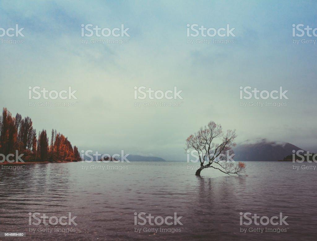 The Tree in Lake Wanaka, south Island, New Zealand landscape royalty-free stock photo
