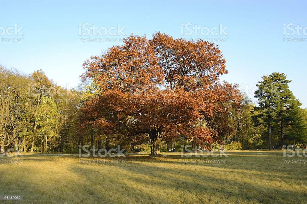 The tree in middle of a glade royalty-free stock photo