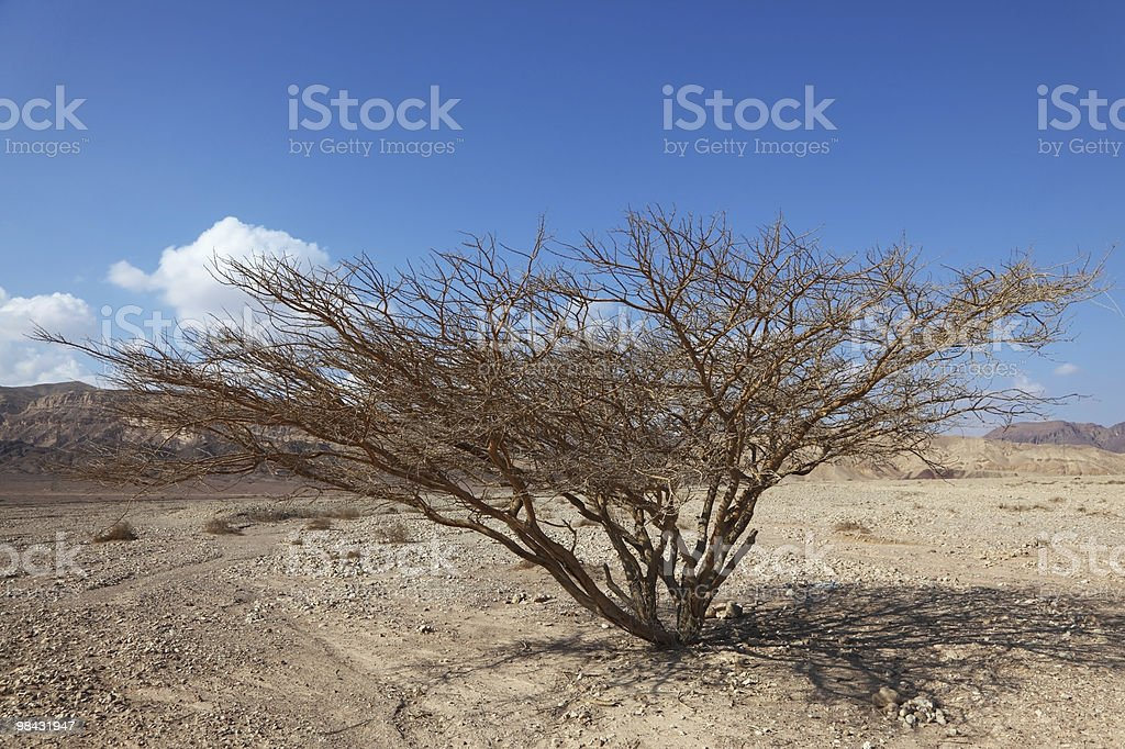 The tree in stone desert royalty-free stock photo