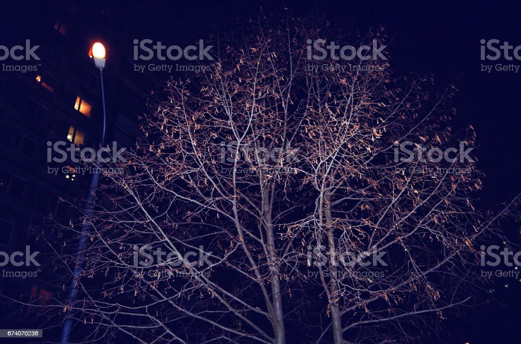 the tree in the yard of Moscow royalty-free stock photo