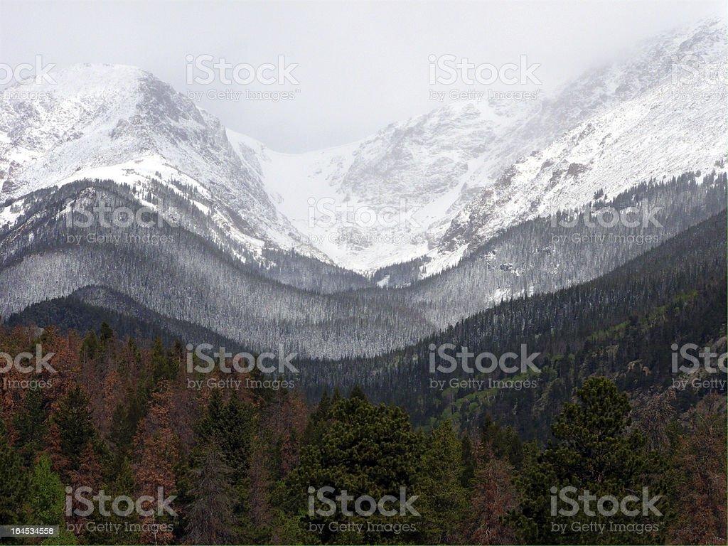 The Tree Line royalty-free stock photo