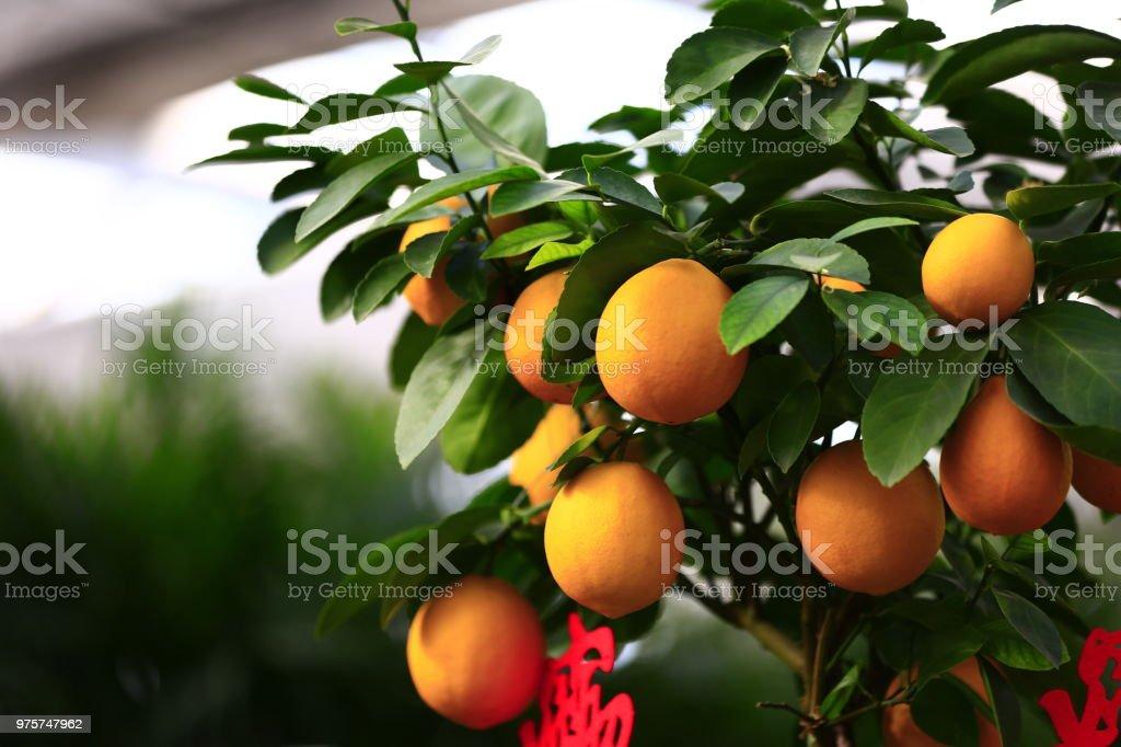 Der Baum Reife orange - Lizenzfrei Fotografie Stock-Foto
