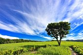 the  tree on the green field with blue sky