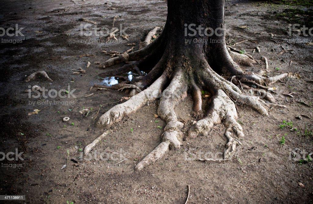 The tree... royalty-free stock photo