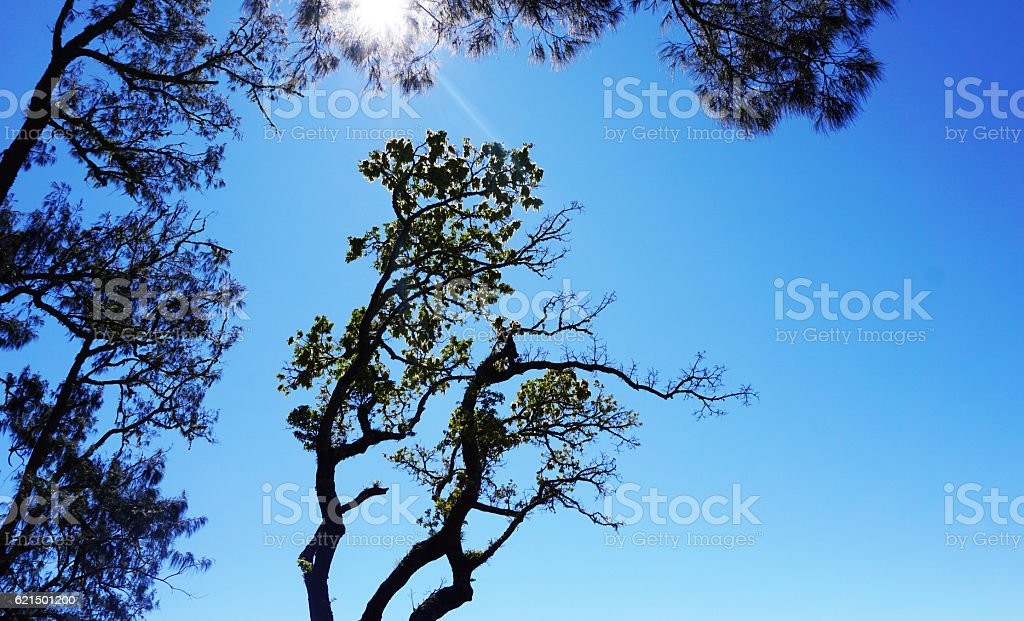 The tree shilouete foto stock royalty-free