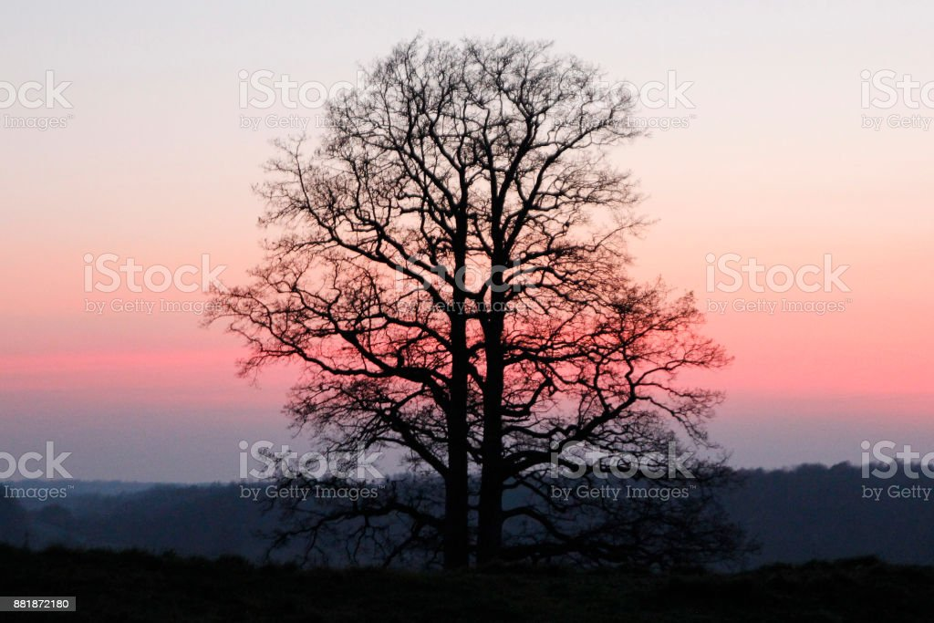 The tree stands on a hill stock photo