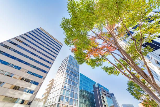 the tree that started to turn red and building - office building exterior stock pictures, royalty-free photos & images