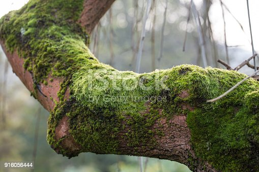 the tree trunk covered with the moss