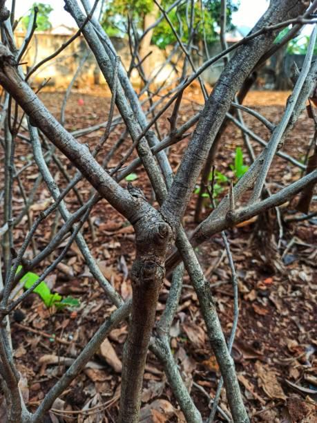 O Tronco da Árvore - foto de acervo