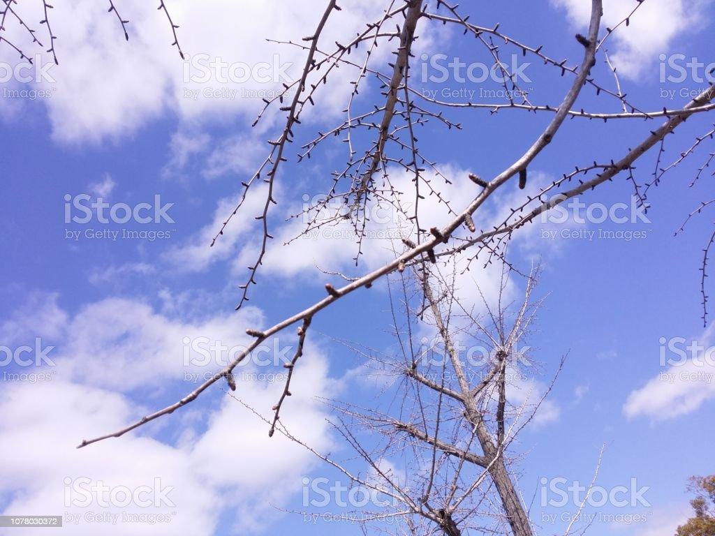 青い空に輝く春がツリー近日公開予定。 ストックフォト