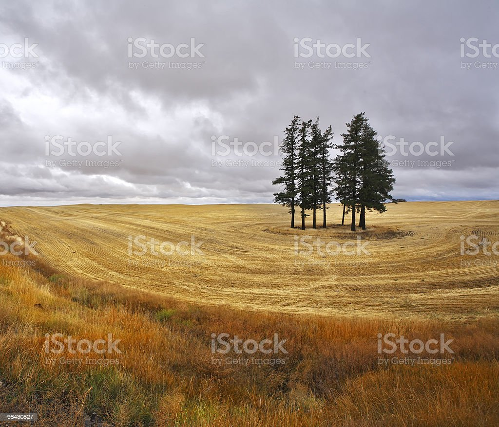 The trees in fields royalty-free stock photo