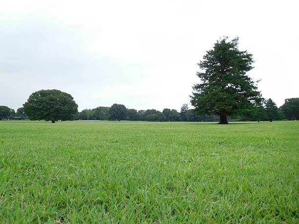 The trees in the green field in the cloudy morning – Foto