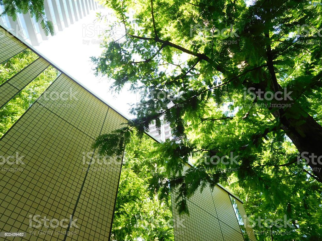 The trees in the mirror attached on the building stock photo