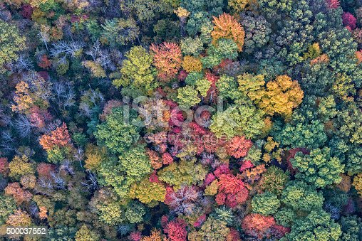 istock The Trees Of Autumn From Above 500037552