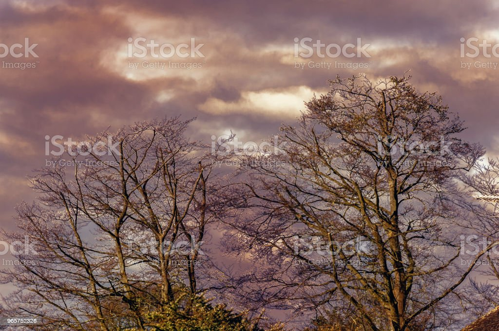 The trees on the red sky background - natural scenery - Royalty-free Backgrounds Stock Photo