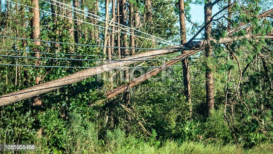 Some of the fallen trees got entangled with the power lines after it was hit by Hurricane Michael