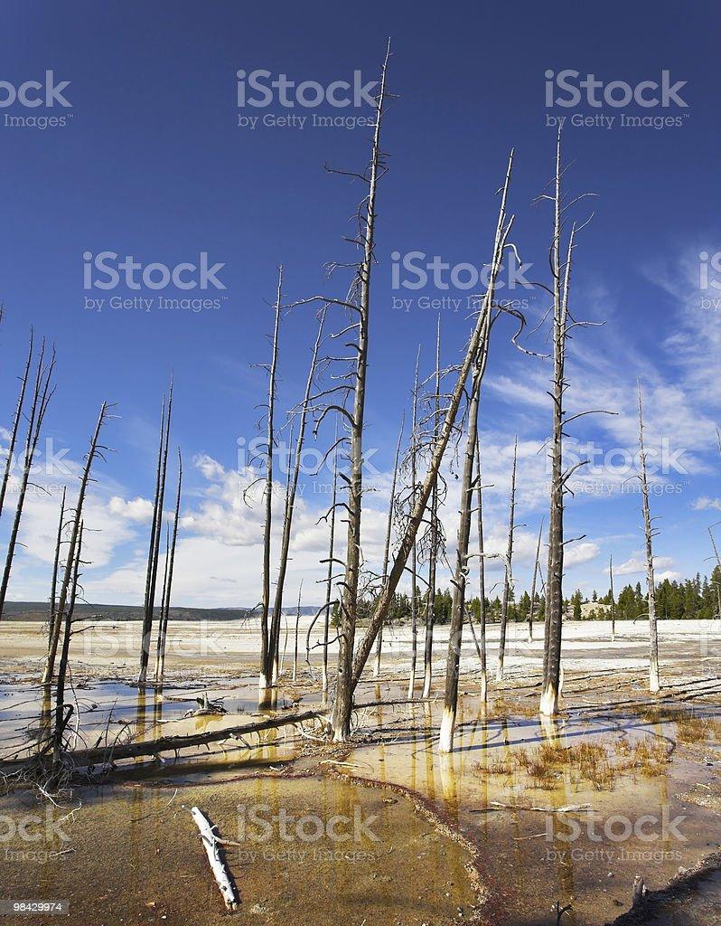이 트렁크 of 나무 royalty-free 스톡 사진