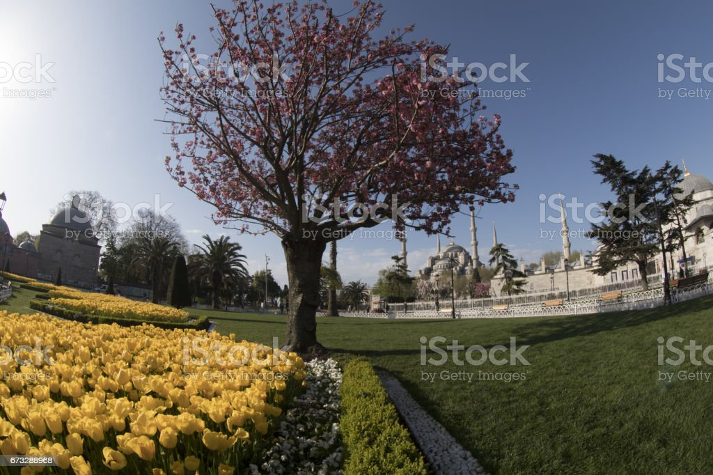 the Tulip Festival in Sultanahmet royalty-free stock photo