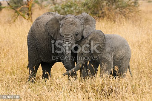 Two small elephants, brothers of different ages are near each other