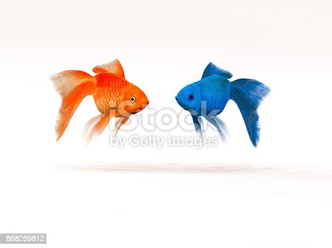 istock The two goldfish differently 858259812