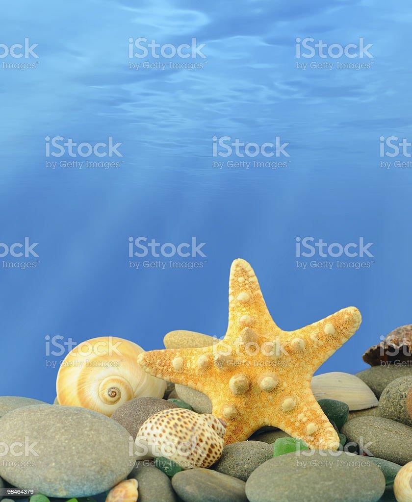 The underwater world royalty-free stock photo