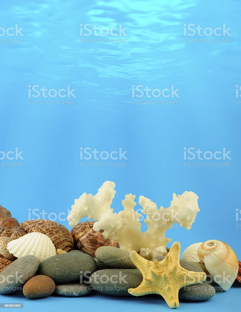 The underwater world royalty-free stock photo