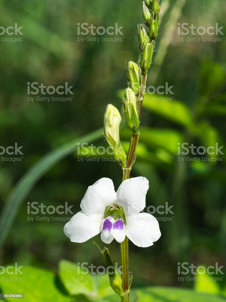 The Unwanted flora Flower Blooming stock photo