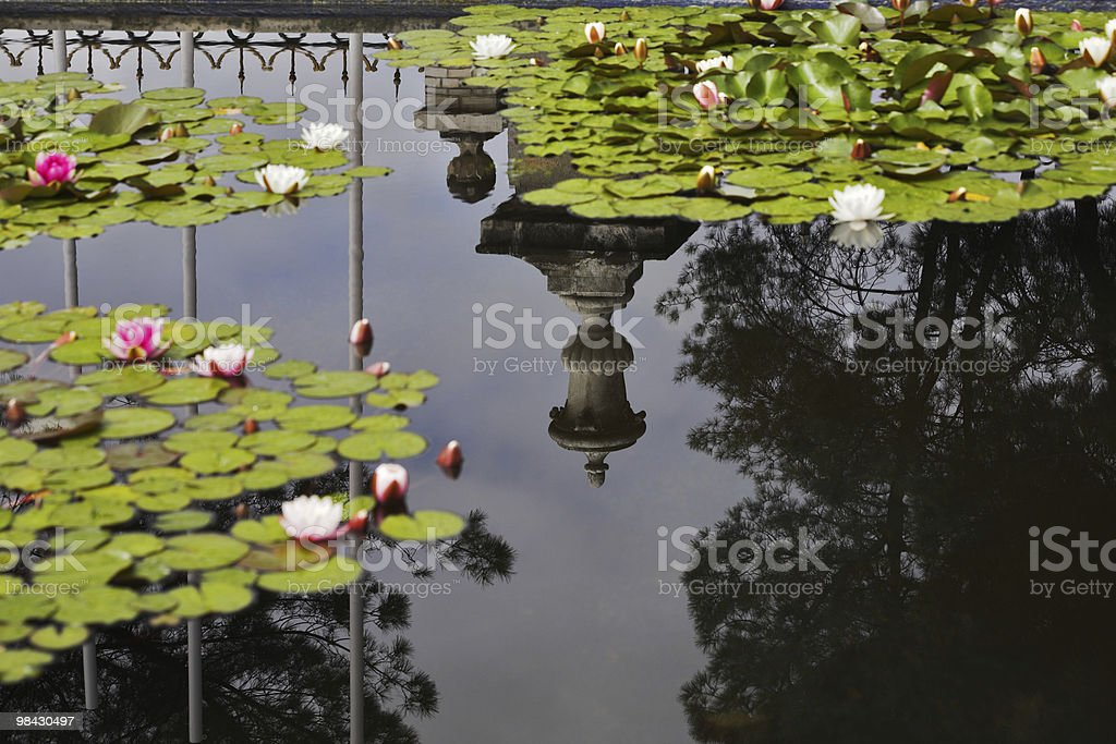 The vase reflected in water of a pond royalty-free stock photo