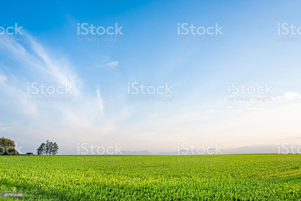 The very large field and sky stock photo