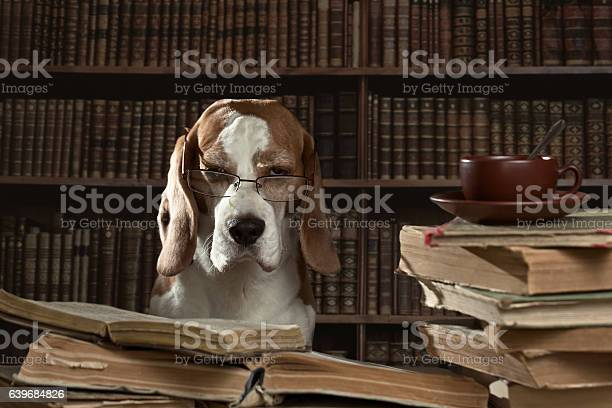 The very smart dog studying old books in library picture id639684826?b=1&k=6&m=639684826&s=612x612&h=ntvai5p keknm0ayolizevo qgkgujlryw2pjumespw=