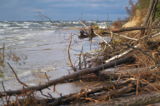 The view of a flooded coastline with fallen trees during the storm in Riga, Latvia. Lielupe river estuary to the Baltic sea