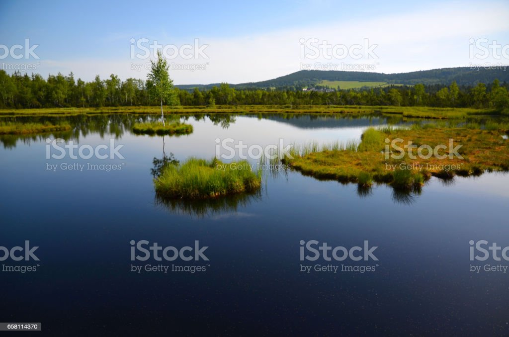 The view of the lake with islands Chalupská moor between forests under blue sky in Sumava in Czech Republic royalty-free stock photo
