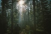 The view of the sun rising in the forest