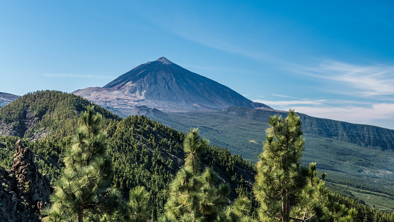 The view of the volcano Teide, pine forest