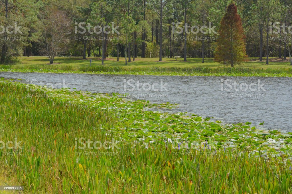 The view of Walsingham Lake at Walsingham Park In Largo, Florida stock photo