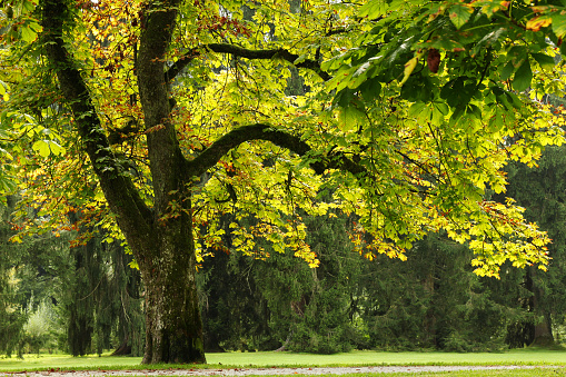 istock The view on the park with big trees in the sunny day. 695722170