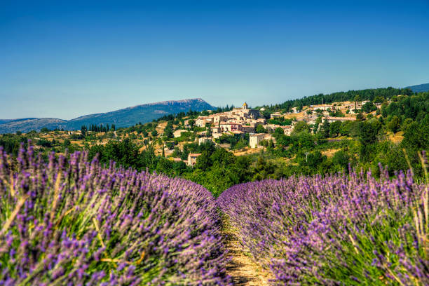 The Village of Aurel Near a Lavender Field in Beautiful Provence, France The village of Aurel near a lavender field in beautiful Provence, France provence alpes cote d'azur stock pictures, royalty-free photos & images